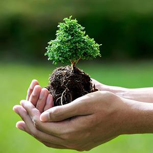Acidi umici e fulvici nella cura del bonsai