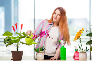 63438115 - redhead woman taking care of plants at home