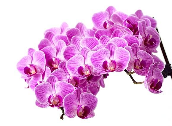 Idee e consigli sulle orchidee