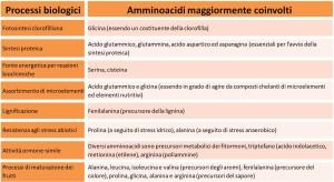 amminoacidi proprietà