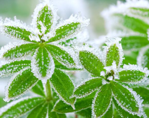 Attenti al gelo, proteggiamo le nostre piante !!!
