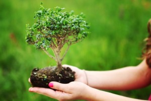 10254158 - bonsai in hands on green grass background