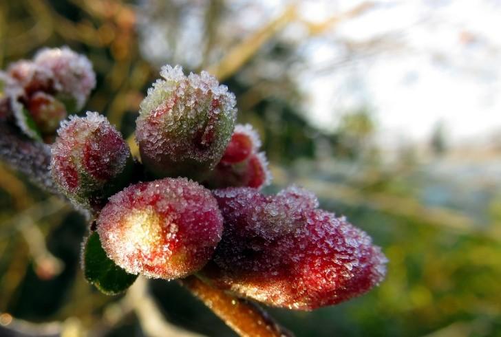Fiori del mese di marzo: rinvasare la Gardenia, il Geranio e la Gerbera