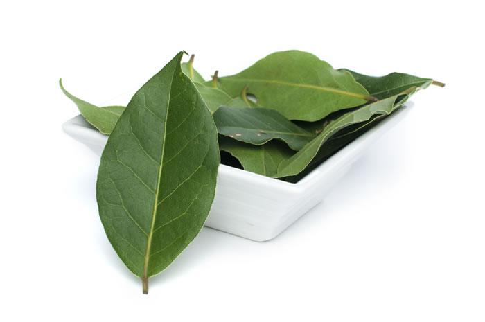 Alloro: proprietà benefiche della pianta