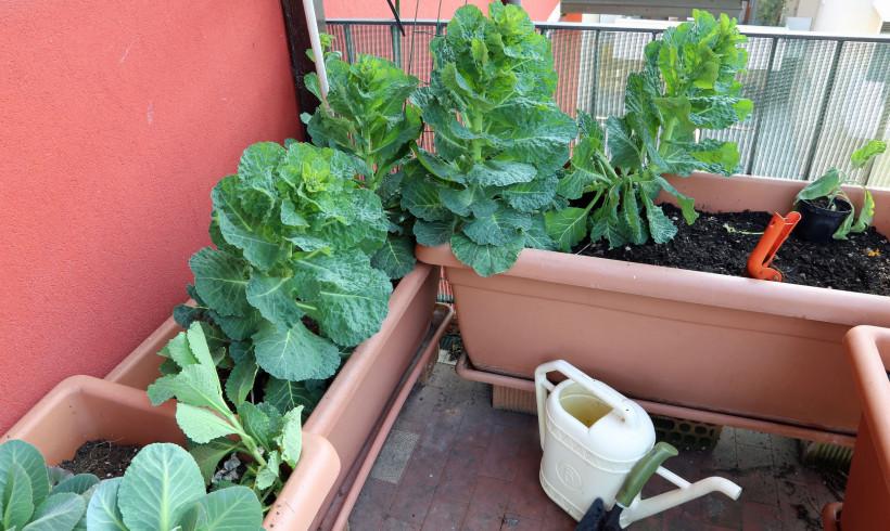 Coltivare l'orto bio sul balcone e come nutrire le tue piante