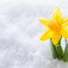 Fiori da seminare a Gennaio : prepariamo il nostro giardino per l'arrivo della Primavera !!