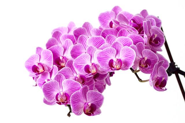 Come curare le orchidee – idee e consigli