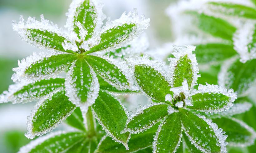 Freddo, gelo, stress termici? Preserviamo le nostre piante
