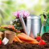 Coltivare l'orto, speciale autunno