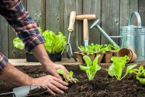 orto da coltivare