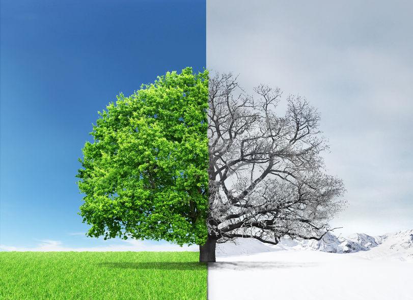 Giardino d'inverno: consigli ed idee per la cura del verde nei mesi più freddi