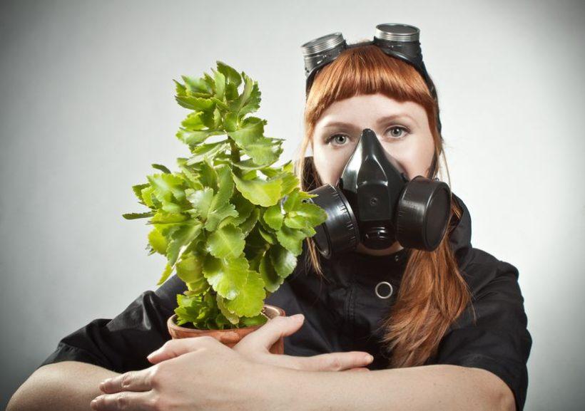 Malattie delle piante : impariamo a riconoscerle !