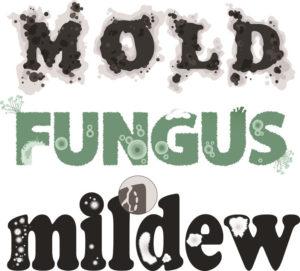Malattie funghi - malattie crittogamiche