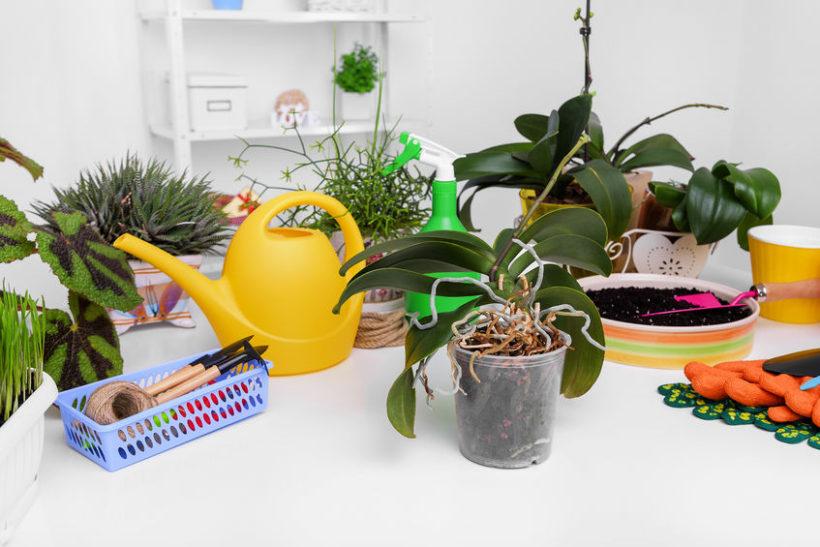 Orchidea come curarla – Rinvaso e manutenzione