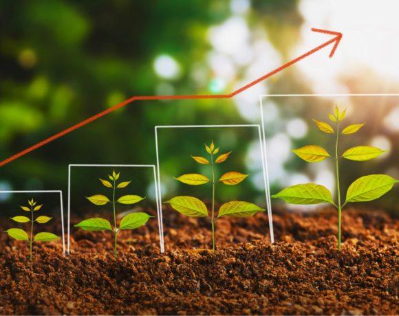 Bioattivatori, idrolizzati proteici ? Scopri Veg Up Plus risorsa innovativa per il benessere delle piante