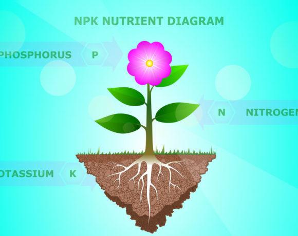 Concimi ternari liquidi per le piante : come scegliere ?