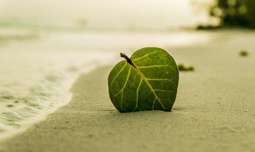 Solfato ferroso: rinvigorire e rinnovare il verde dopo l'estate