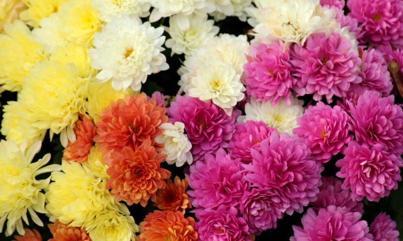Fiori autunnali: colori brillanti e vivaci anche in autunno
