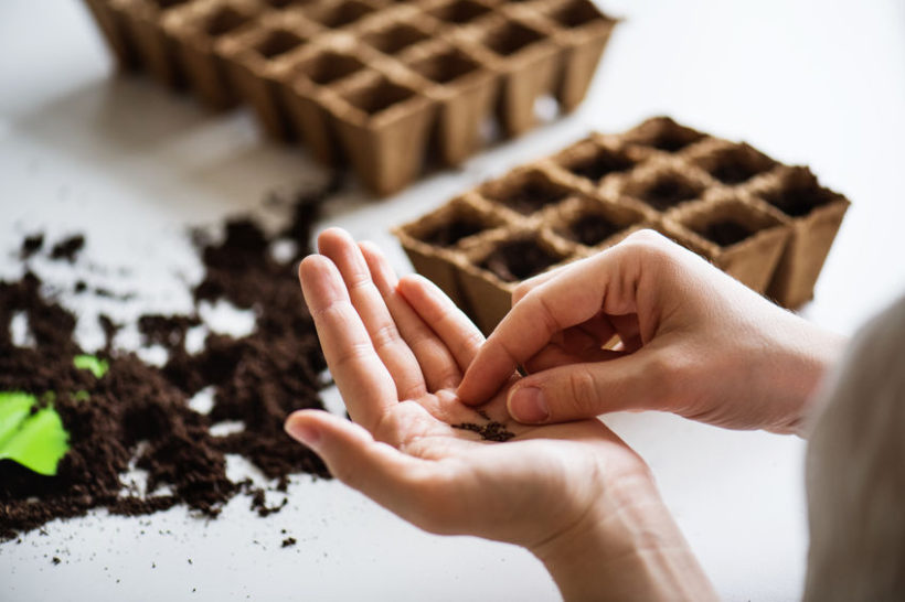 Bonsai dal seme: semina e coltivazione