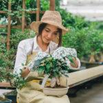 coltivare bonsai