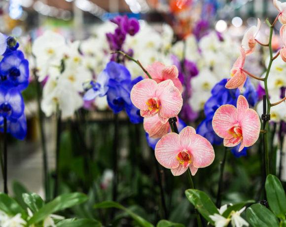 Tipi di orchidee- varietà di orchidee più facili da coltivare