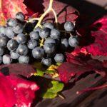 proprietà dell uva