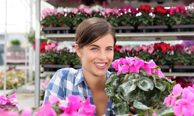 Ciclamini : consigli per fioriture invernali allegre