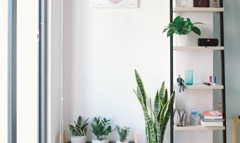 Piante da appartamento-cura ed esposizione alla luce