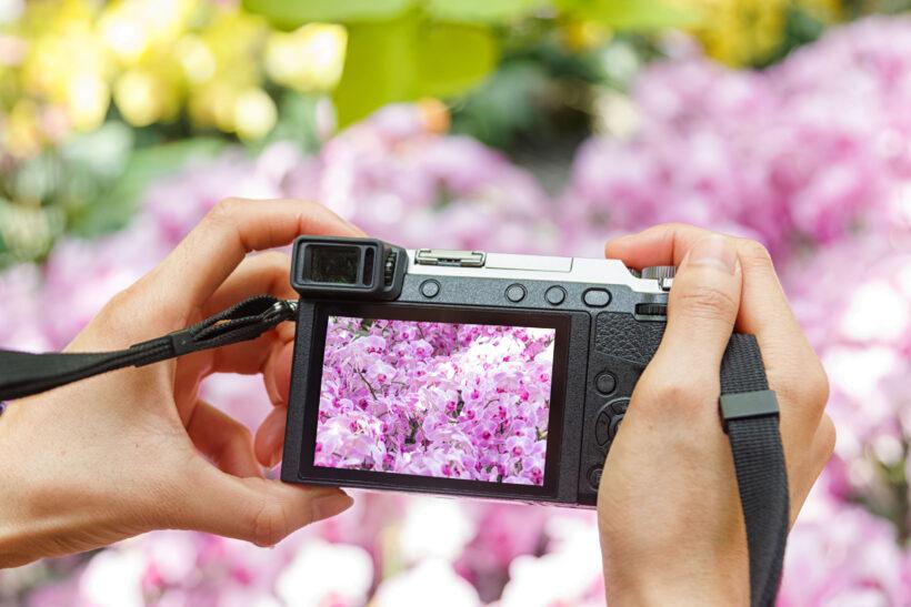 Orchidea, la più bella – Scatta la tua foto e partecipa al contest fotografico!